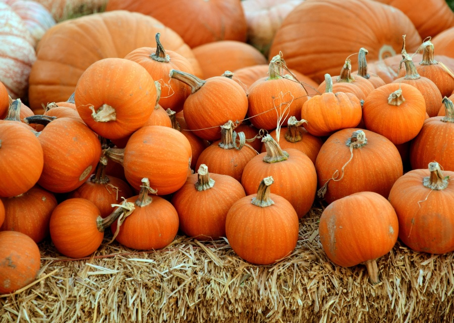 The Difference Between APIs and Webhooks Explained By Selling Seasonal Produce on YourFarm